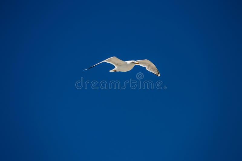 wingspan fotografie stock