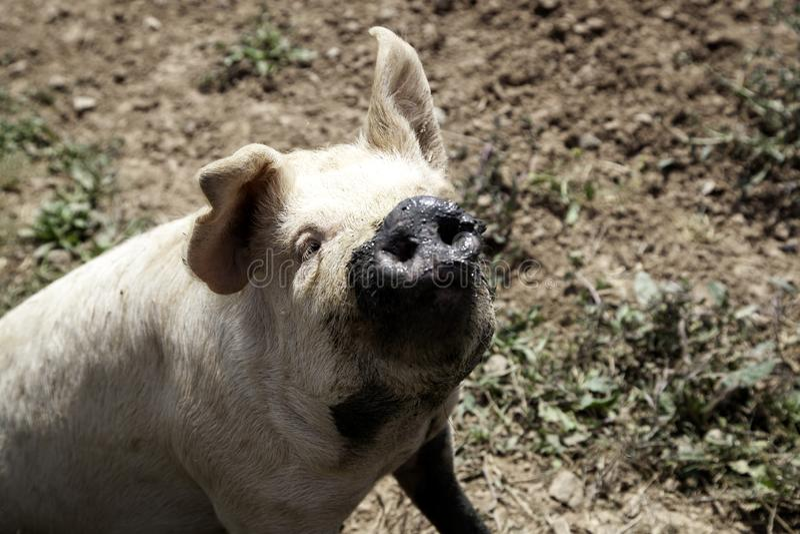 ?winie na gospodarstwie rolnym fotografia stock