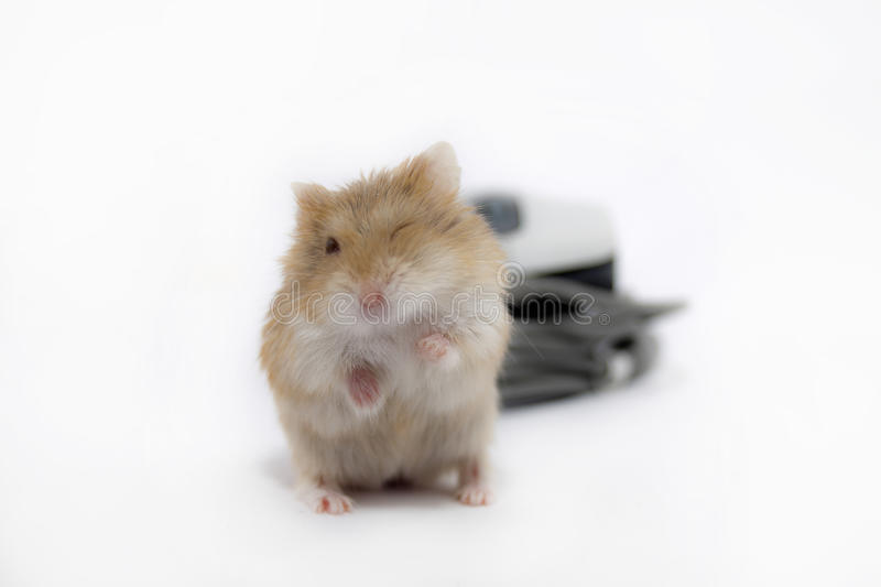 Wink mouse. royalty free stock photos