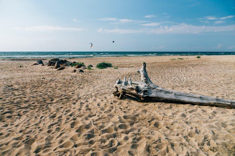 Winkelhaak op wild zandig strand van Oostzee stock afbeeldingen