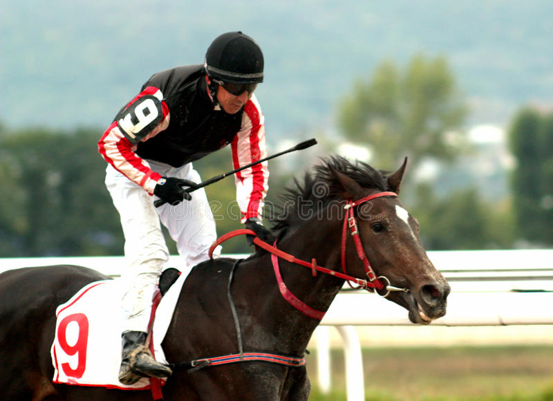 The Winner. A racehorse and jockey cross the finish line first in a horse race stock images