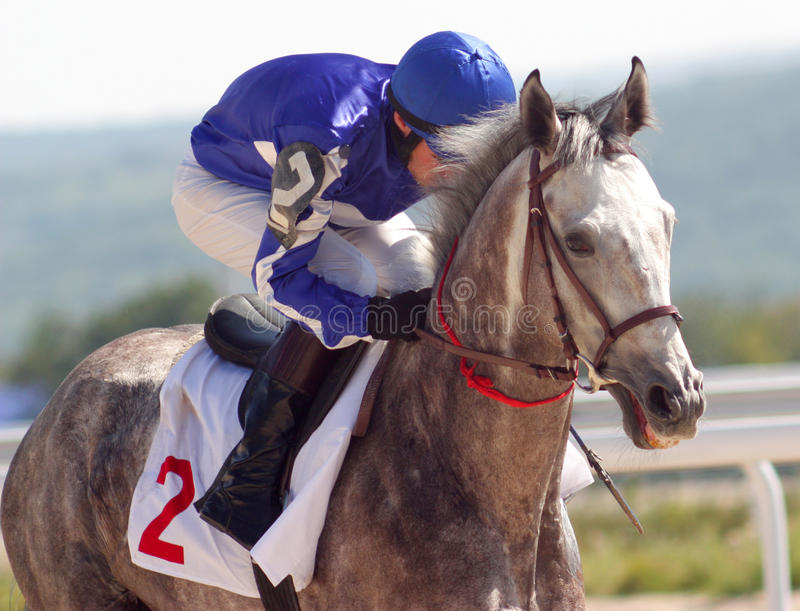 The Winner. A racehorse and jockey cross the finish line first in a horse race royalty free stock photos