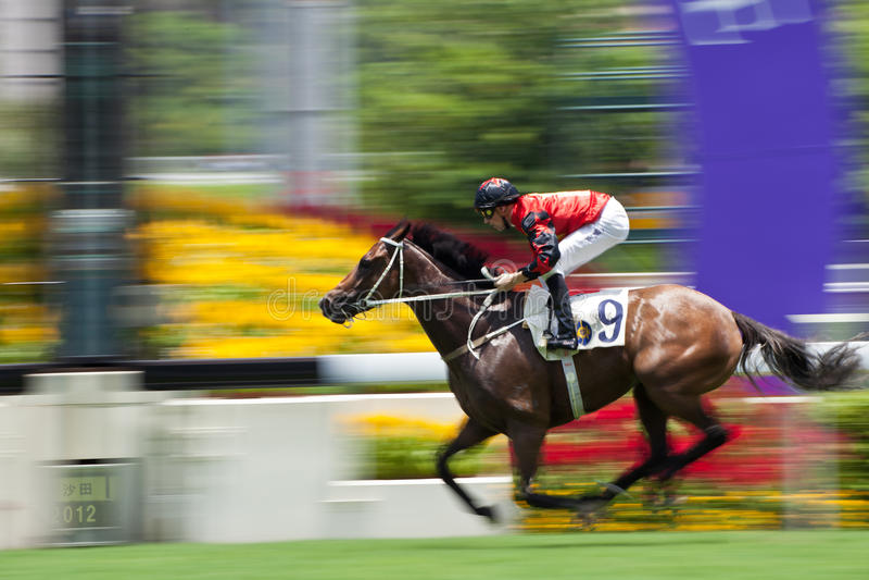 Winner royalty free stock photo