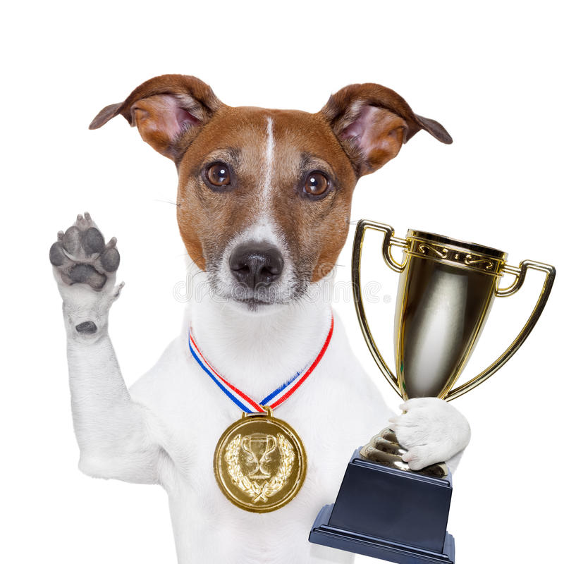 Winner dog royalty free stock photos