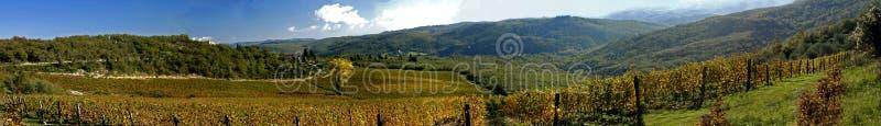 Download Winnica zdjęcie stock. Obraz złożonej z grapefruits, tuscany - 1666280
