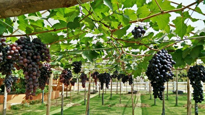 Winnica zdjęcie stock