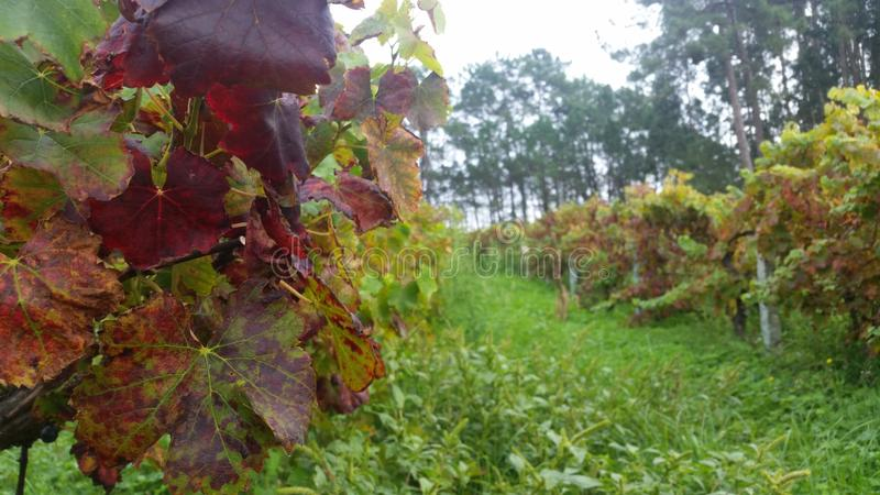 Winnica fotografia stock