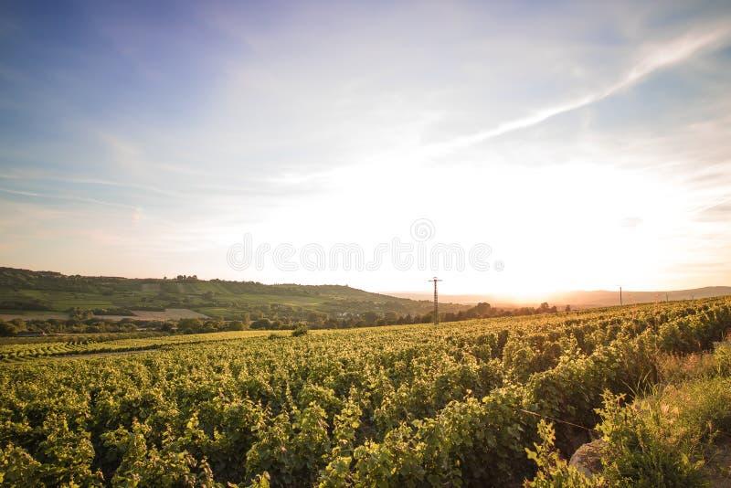 Winnica zdjęcia stock