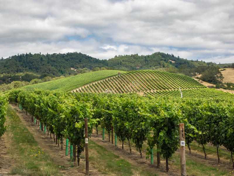 Winnica i wytwórnia win w obszarze wiejskim obrazy royalty free
