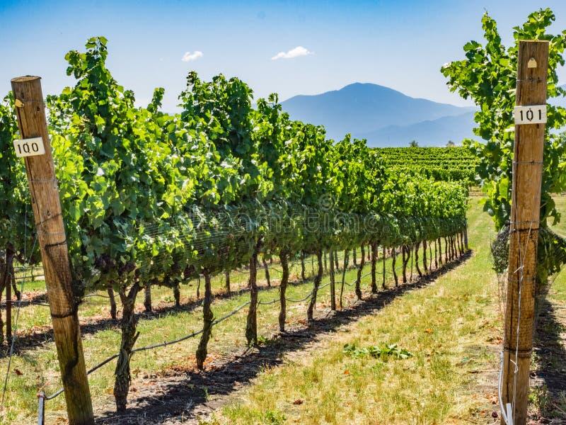 Winnica i wytwórnia win w obszarze wiejskim zdjęcia stock