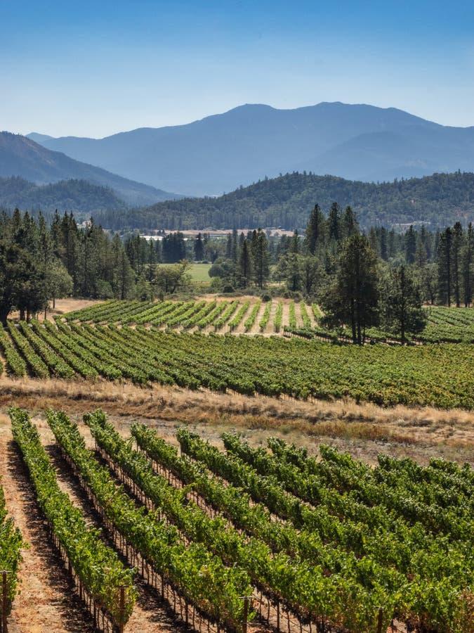 Winnica i wytwórnia win w obszarze wiejskim obraz royalty free