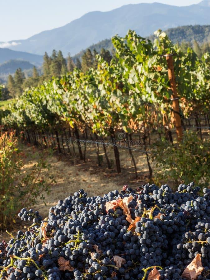 Winnica i wytwórnia win w obszarze wiejskim obraz stock