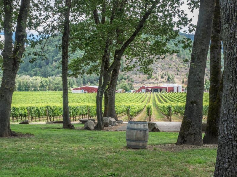 Winnica i wytwórnia win w obszarze wiejskim zdjęcie royalty free