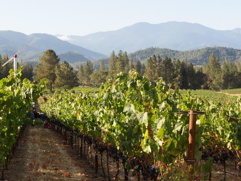 Winnica i wytwórnia win w obszarze wiejskim zdjęcie stock
