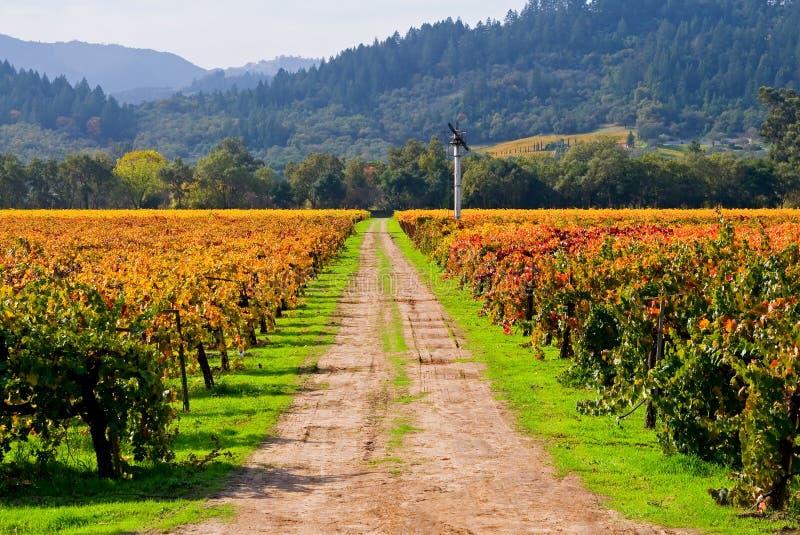 winnica jesieni obrazy stock