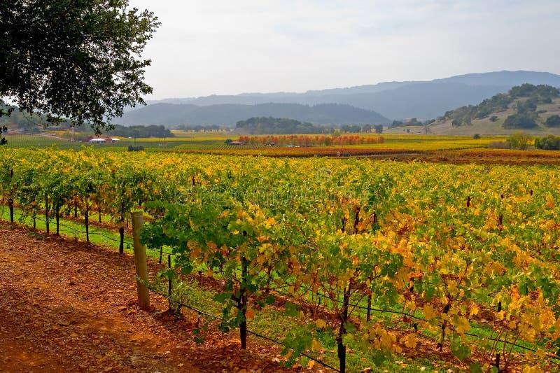 winnica jesieni zdjęcia stock