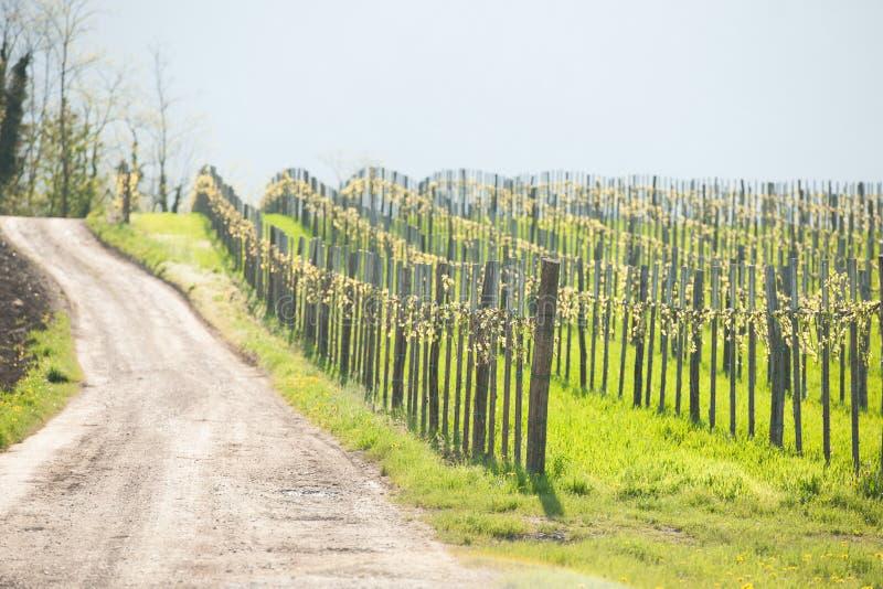 Winnica na słonecznym dniu w wczesnej wiośnie w zachodnim Slvenia euope obrazy stock