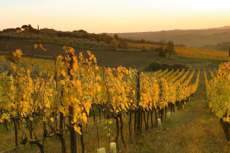 Winnica na wzgórzach Florencja w Tuscany podczas jesień zmierzchu zdjęcie stock