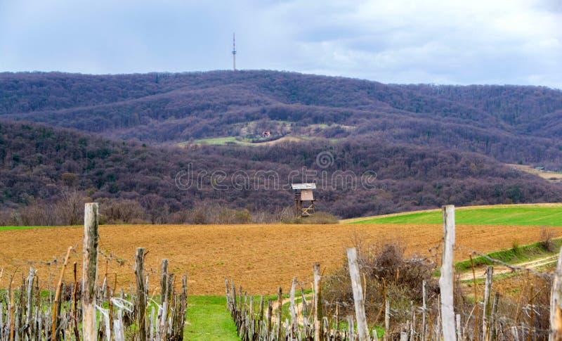 Winnica otaczający rolniczymi polami obrazy royalty free