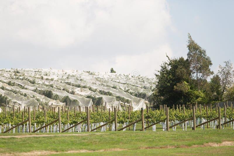 Winnica północny Tasmania zdjęcie royalty free