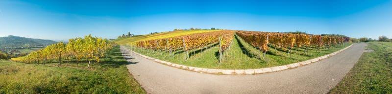 Winnica panoramy sceneria z winogradami w jesieni obrazy stock