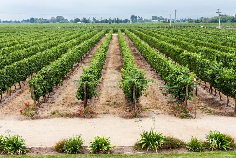 Winnica w Colchagua dolinie Chile fotografia stock