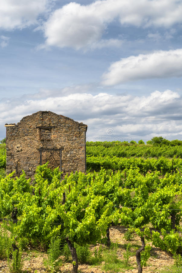Winnica przy latem w Languedoc Roussillon zdjęcia stock