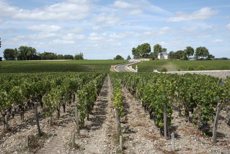 Winnica przy Pauillac południowymi zachodami Francja obrazy royalty free