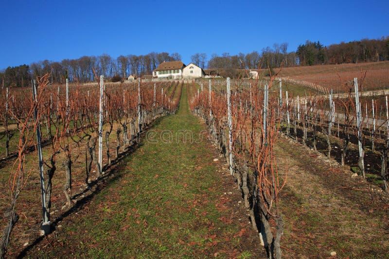 winnica szwajcarski zdjęcie stock