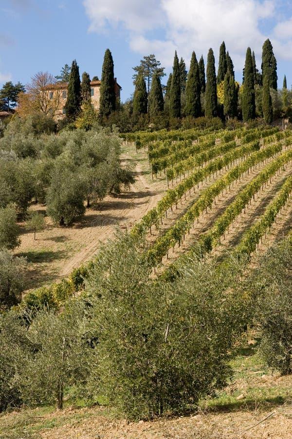 winnica włoski fotografia stock