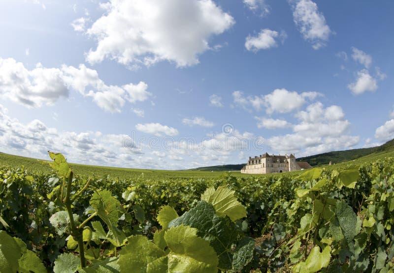 Winnica w Burgundy, Bourgogne. Francja zdjęcia royalty free