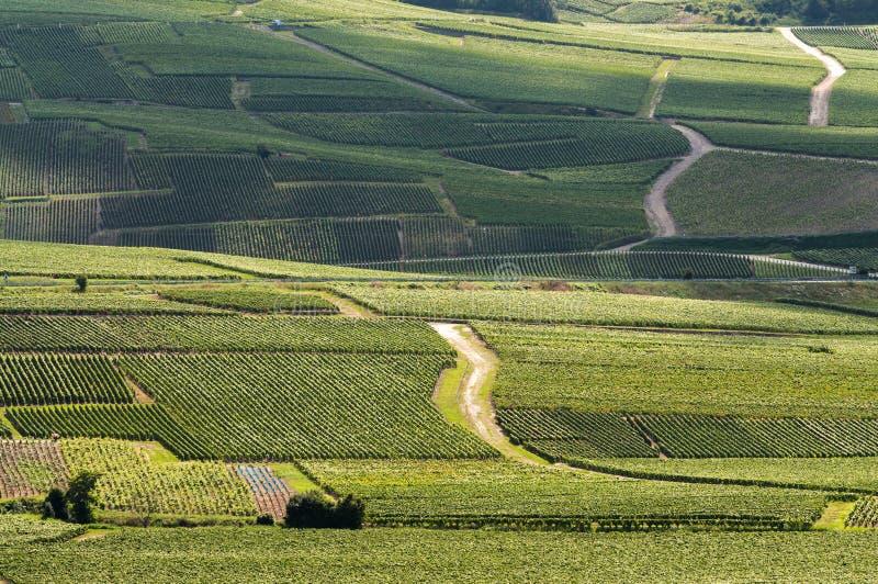 Download Winnica W Francja Zdjęcie Royalty Free - Obraz: 29230775
