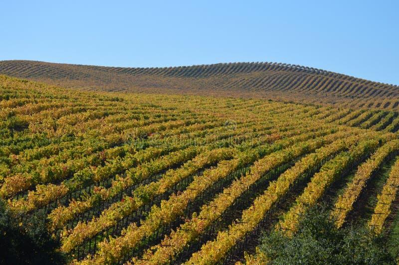 Winnica w jesieni fotografia royalty free