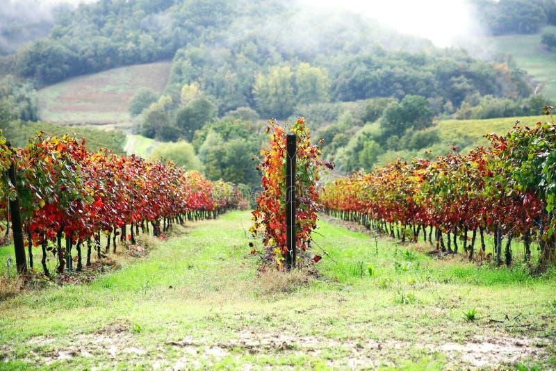 Winnica w jesieni, Tuscany obraz stock