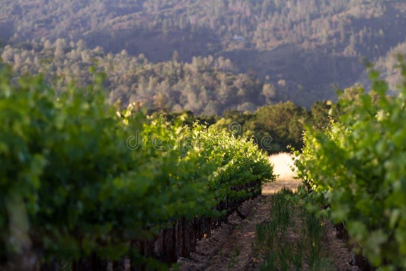 Winnica w Kalifornia fotografia royalty free