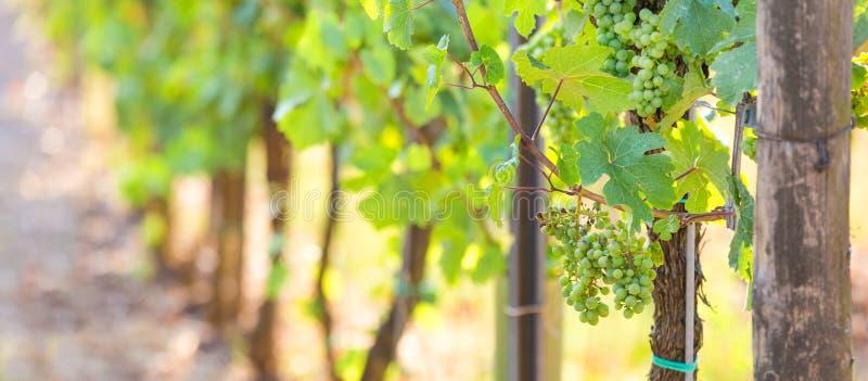 Winnica w lecie zdjęcia stock