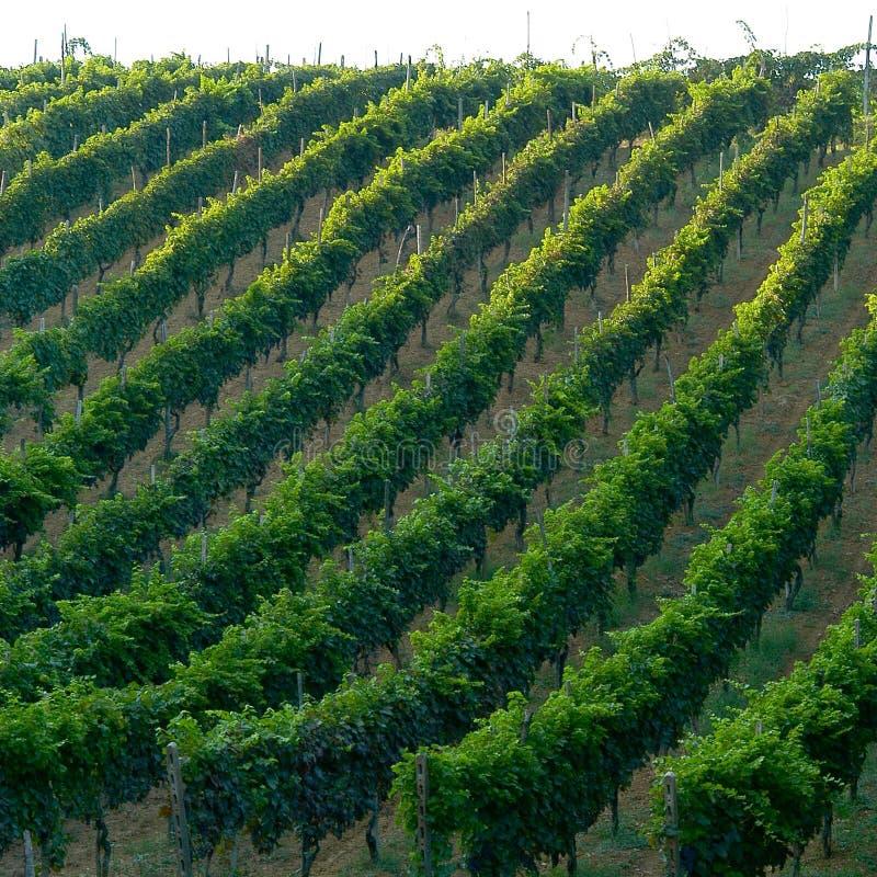 Download Winnica włoski obraz stock. Obraz złożonej z kultywacja - 129133