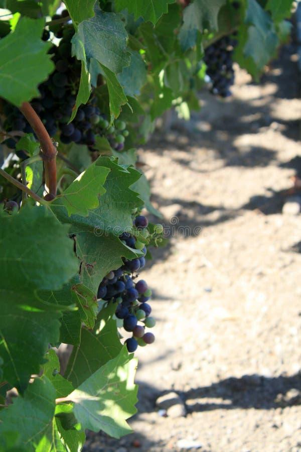 Winnica w Santiago mieście, Chile obrazy royalty free