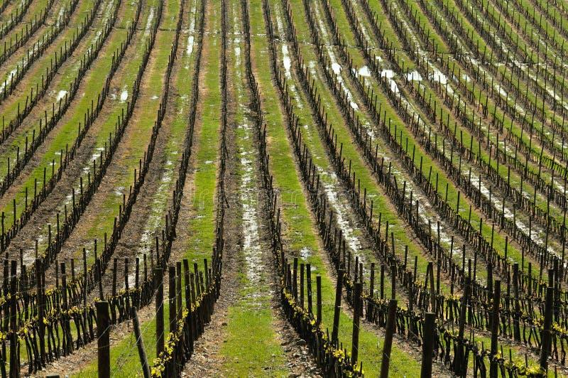 Winnica w Wiosna zdjęcia royalty free