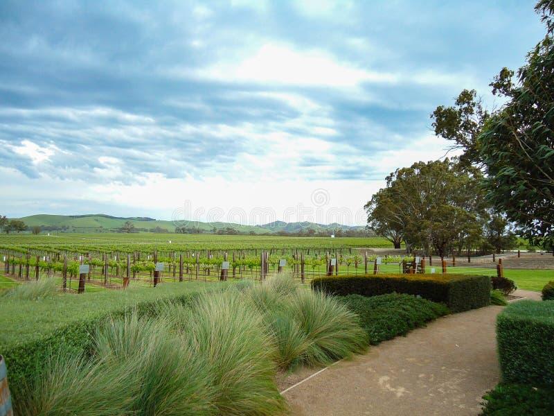 Winnica wytwórnia win Australia fotografia royalty free