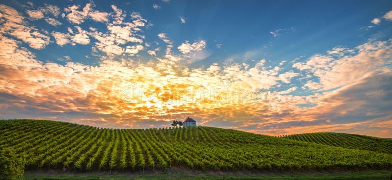 Winnica z rzędami gronowy winograd w wschodzie słońca, zmierzch z starym budynkiem, willa na górze winogradu jarda, tradycyjnego obraz stock