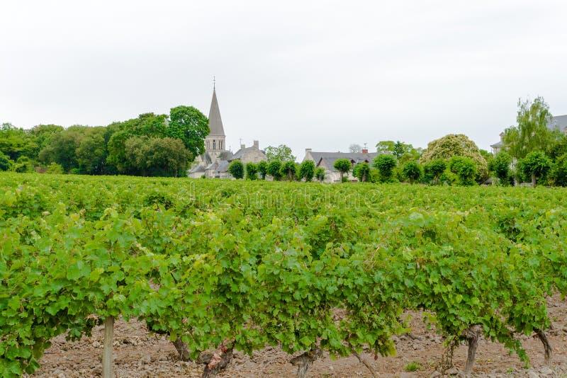 Winnica z winogronami w Loire dolinie Francja zdjęcie stock