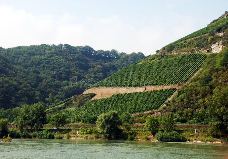 winnica zbocze góry zdjęcia stock