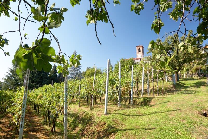 winnice obrazy royalty free