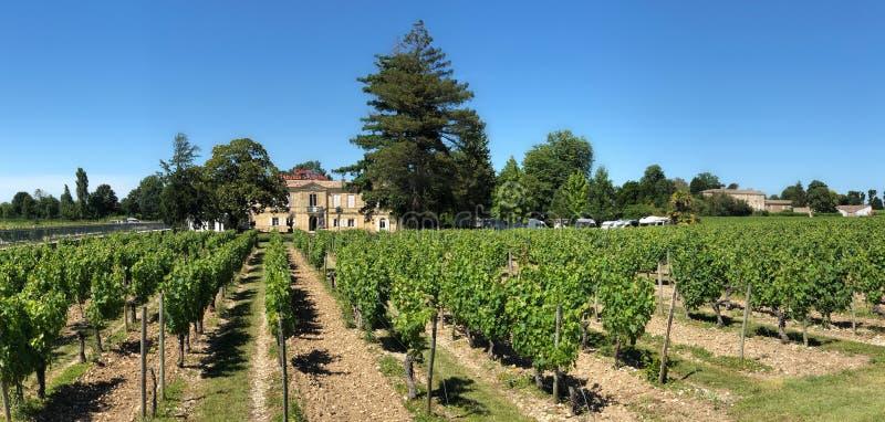 Winnicy Blaye, Francja - zdjęcia stock