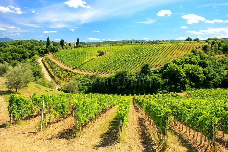 Winnicy blisko Montalcino w Val d ` Orcia, Tuscany, Włochy obraz royalty free