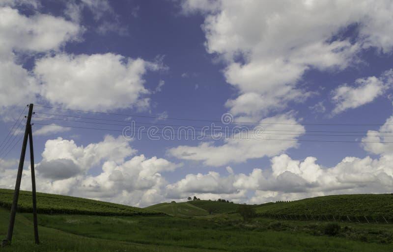 Winnicy, Daruvar, Chorwacja zdjęcie stock
