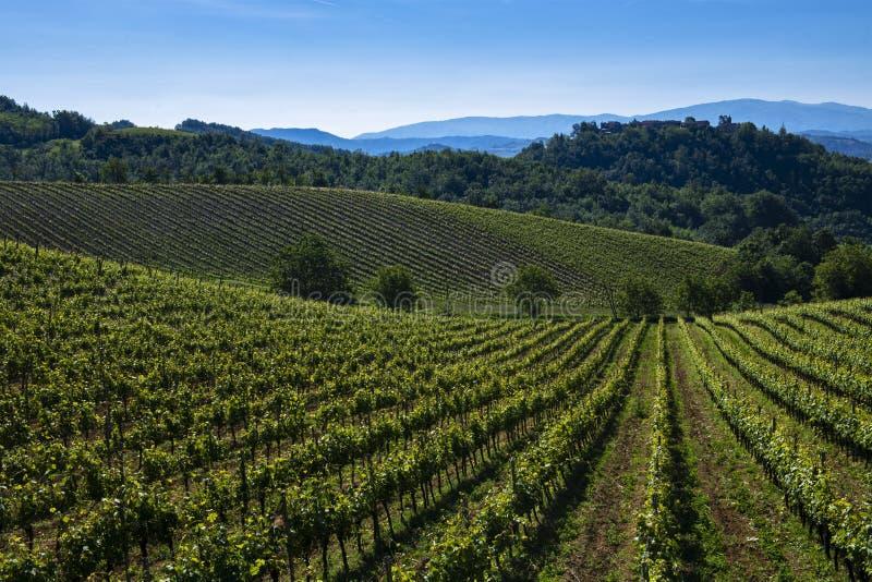 Winnicy i drewna na wzgórze stronie Cascina Saliceti lokalizować w zarząd miasta Montegioco Podgórski Włochy obraz royalty free