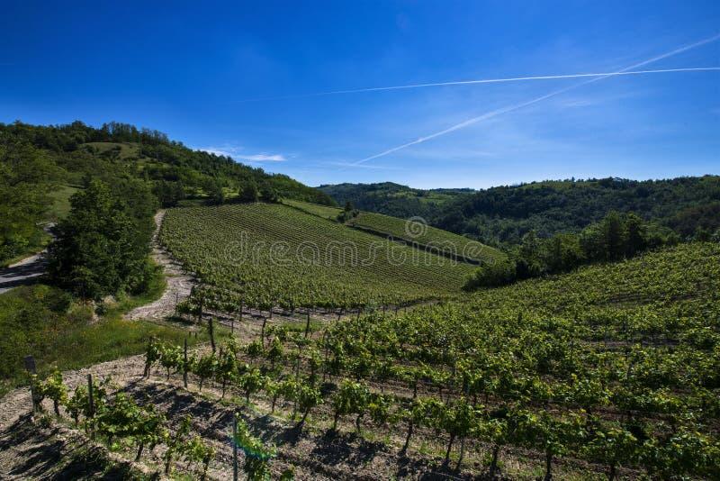 Winnicy i drewna na wzgórze stronie Cascina Saliceti lokalizować w zarząd miasta Montegioco Podgórski Włochy zdjęcia stock