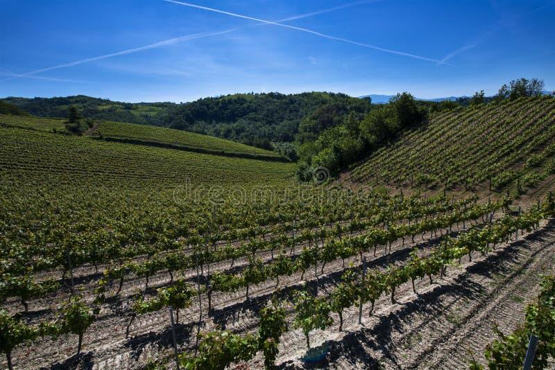 Winnicy i drewna na wzgórze stronie Cascina Saliceti lokalizować w zarząd miasta Montegioco Podgórski Włochy obrazy royalty free